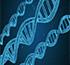 GENETICA ANTI-AGING